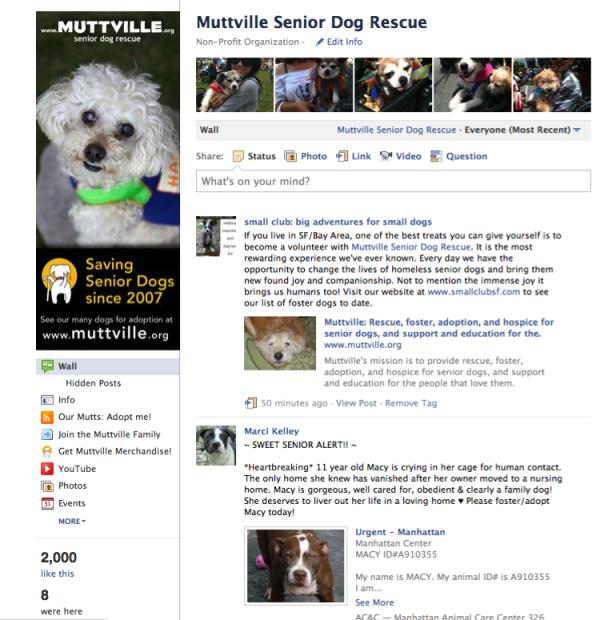 Muttville Senior Dog Rescue  Facebook
